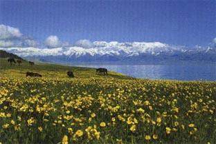 巴音布鲁克天鹅湖风景区位于 巴音 郭楞蒙古自治州