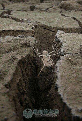云南 张悦/电站的水早已干涸,龟裂的土地上有许多已经死亡的动物。