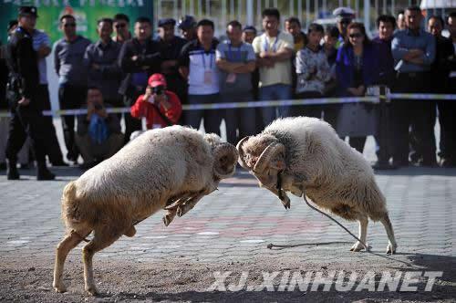 """民族体育运动会上的""""动物大战"""""""