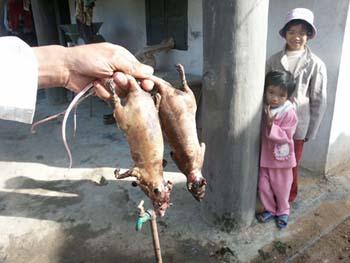 动物习惯饮食天敌