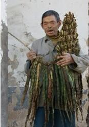 """中国 繁体/烟袋——土家人的""""驱忧袋"""""""