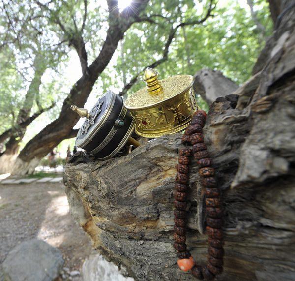 藏族人对森林树木的心灵感知   原始宗教普遍具有的一种思想观念便是