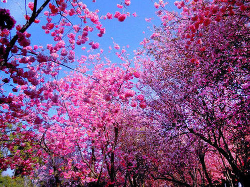 春天紫色花有哪些