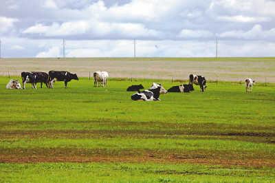 内蒙古自治区家畜改良工作站苏雅说