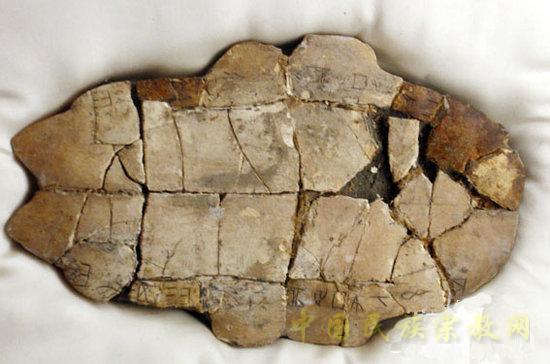 动物 龟 550_364