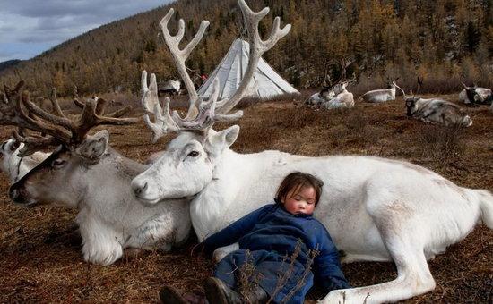《霍比特人》中骑着驯鹿的精灵王,金色长发,眼若星辰,回眸一笑百媚生。其实,与驯鹿为生并不是什么传奇。3000年来,蒙古的泰加针叶林带一直居住着这么一群骑驯鹿的人,他们是杜科哈人(也被称之为察坦人)。杜科哈的蒙语名字Tsataan可以翻译为驯鹿牧民,驯鹿就是他们生活的全部。对于杜科哈人来说,驯鹿绝不是普通的家畜。在他们的社会和宗教文化中,驯鹿拥有特殊地位,是他们心目中的图腾。   摄影师Hamid Sardar-Afkhami是哈佛大学中亚语言及文化学博士。他的职业生涯起源